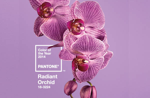 FFF - Pantone Pumps Up Orchid ...
