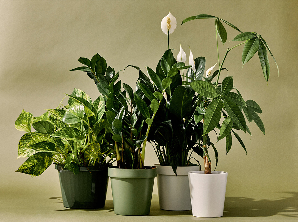 Plants that make it easy being green